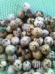 Quail Eggs For Sale | Agriculture and Foodstuff for sale in Jos South