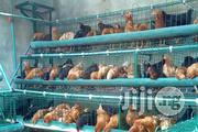Hopico Battery Cage For Sale  | Pet's Accessories for sale in Alimosho