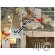 Day Old Cage (240 Birds) Layers ,Broilers Etc | Livestock and Poultry for sale in Ifo