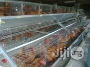 14/15weeks Point Of Lay Available | Livestock and Poultry for sale in Agbado/Oke-Odo