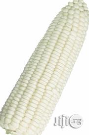 White Hybrid Corn Seed | Agriculture and Foodstuff for sale in Kaduna North