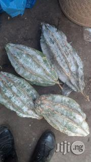 Ugu Seeds Hybrids | Agriculture and Foodstuff for sale in Kaduna